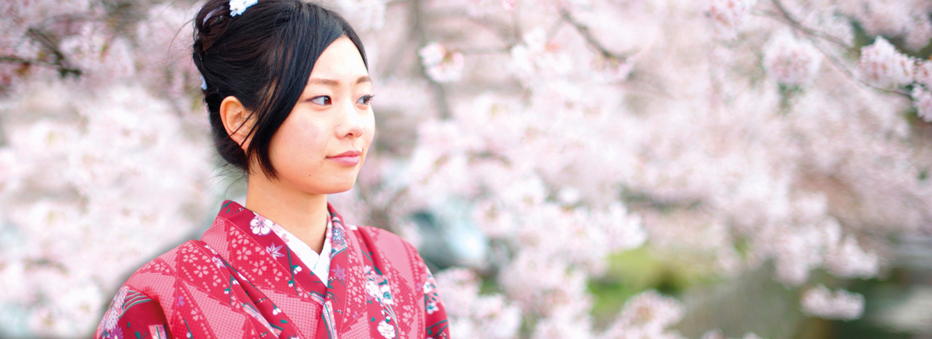 Portrait of young Japanese woman in kimono in front of cherry blossoms